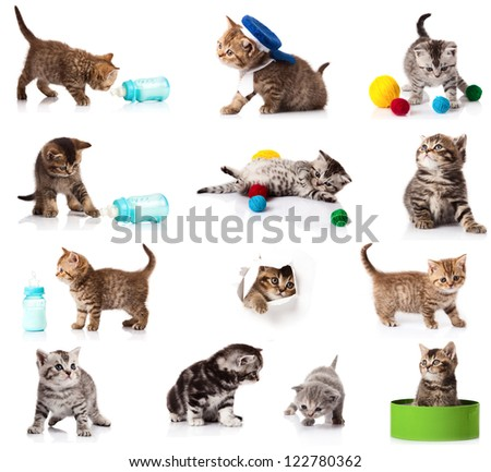 collection of  kitten isolated on white background.  A set of funny cats. British kittens collection - stock photo
