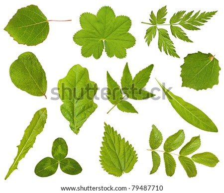 Collection of leaves of different plants on the white - stock photo
