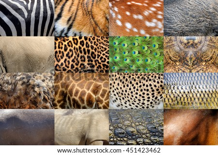 Collection of many real wild animals skin furs - stock photo
