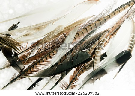 Collection of Natural Feathers from various Birds - stock photo