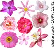 collection of pink summer flowers isolated on white - stock photo