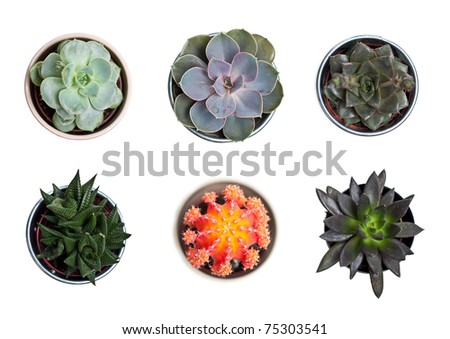 Collection of plants and cacti on white - stock photo