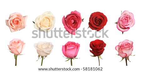 collection of roses, montage from several images