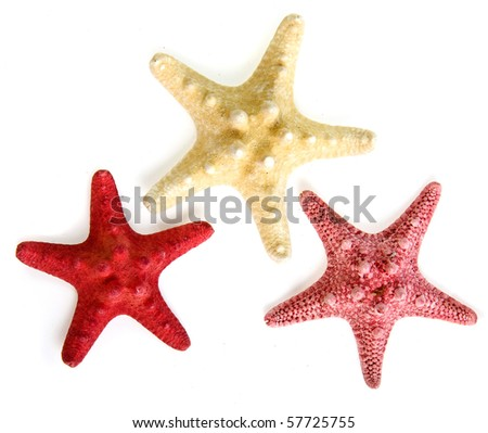 collection of sea star starfish close up macro detail isolated on white background - stock photo