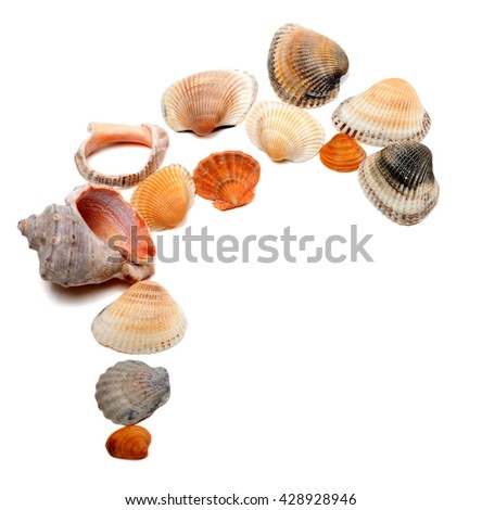 Collection of seashells. Isolated on white background with copy space. - stock photo
