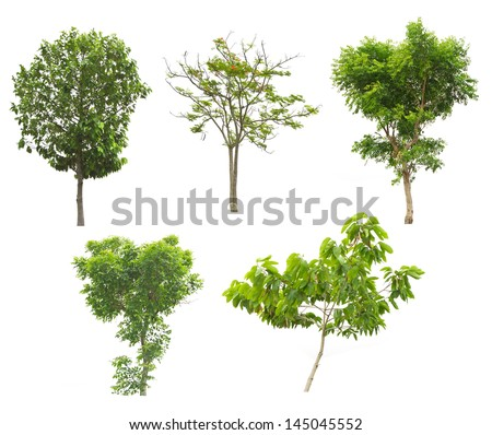 Collection of trees  tropical tree  isolated on white background - stock photo