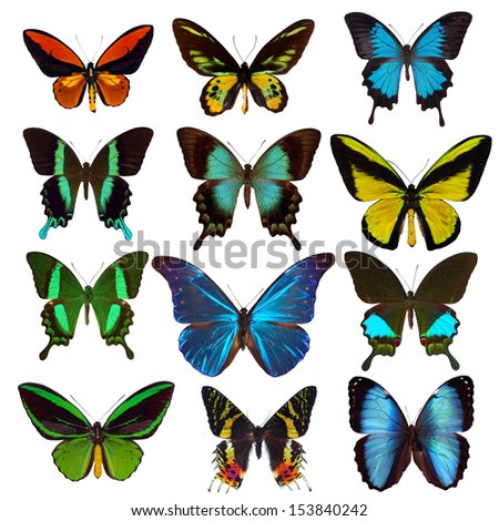 Collection of tropical butterflies - stock photo