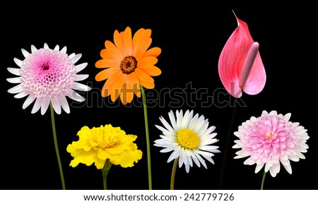 Collection of Various Colorful Flowers and Wildflowers with Green Stick Isolated on Black Background. Vibrant Red, Blue, Pink, Purple, Yellow White, and Orange Colors. Bunch of wildflowers - stock photo