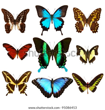 Collection of various kinds of butterflies, isolated on white background - stock photo