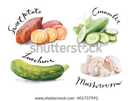 Collection of watercolor hand drawn vegetables isolated on white background. Good for book illustration, magazine or journal article.