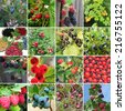 collection of wild berries - raspberry, lingonberry, blueberry, blackberry, strawberry, black currant, white currant, cow berry, bog bilberry - stock photo
