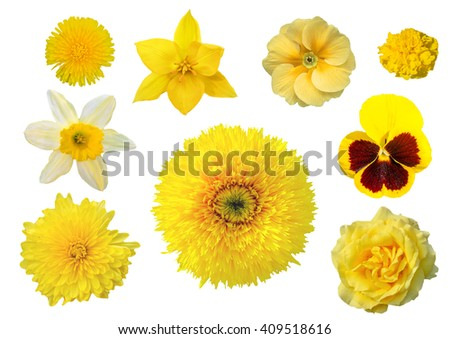Collection of yellow flowers isolated on white background - stock photo