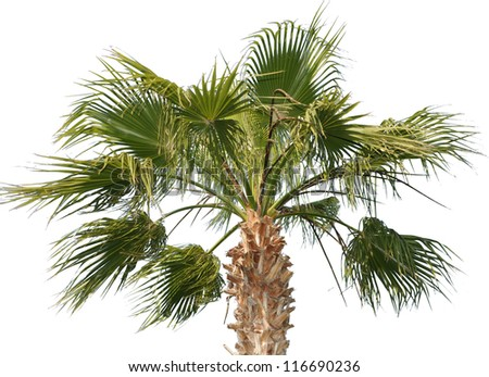 Collection palm tree isolated - stock photo