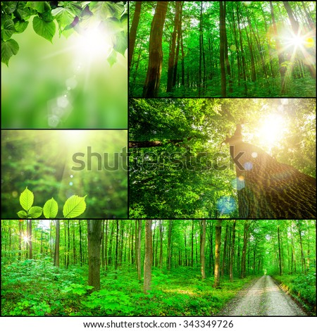 collection panorama forest trees. nature green wood sunlight backgrounds. - stock photo