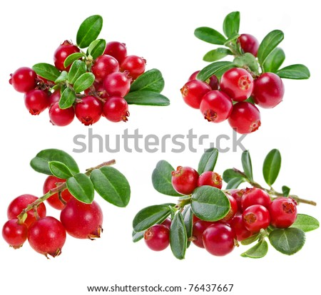collection set fresh cranberries isolated on white background - stock photo