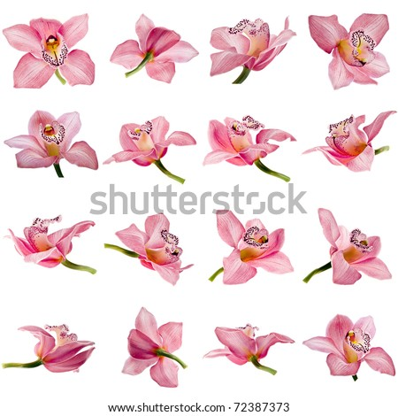 Collection set of beautiful pink Orchid flower on white background - stock photo