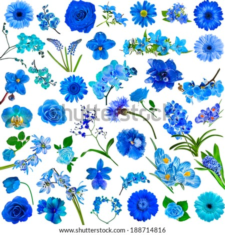 Collection set of blue flowers isolated on white background - stock photo