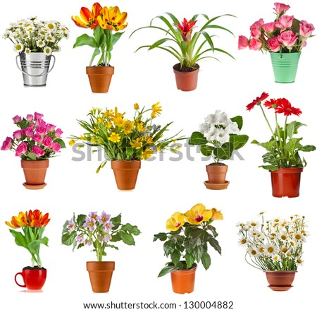 collection set of colorful bouquet flower  in flowerpot and bucket, isolated on white background