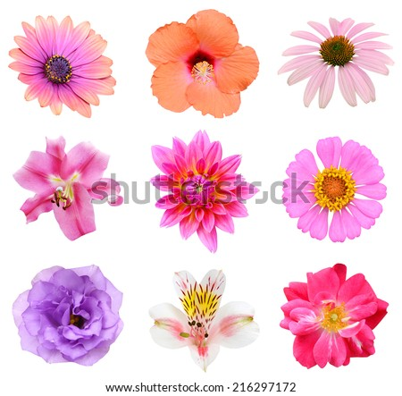 Collection set of Flower heads isolated on white background  - stock photo