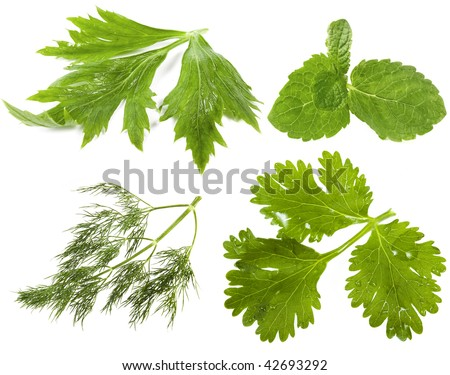 Collection set of fresh herbs ( celery ,  mint , dill, cilantro coriander ), isolated on white background - stock photo