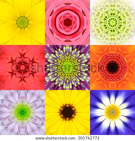 Collection Set of Nine Concentric Flower Mandalas. Full Frame Flower Background in Various Colors, Yellow, Pink, Orange, Blue, Red, Purple. Kaleidoscope Concentric design.