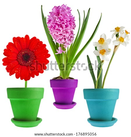 Collection set of spring flower bouquet potted  Isolated on White Background  - stock photo