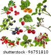 Collection set of wild forest berries  isolated on white background - stock photo
