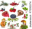 Collection set of wild forest plants with berries , fruits , fungi , nuts  isolated on white background - stock photo