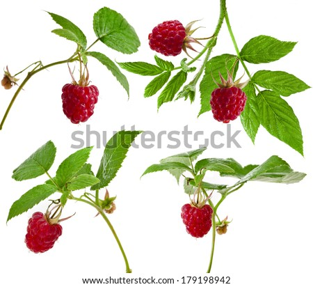 Collection set raspberry close up macro shot isolated on white background  - stock photo