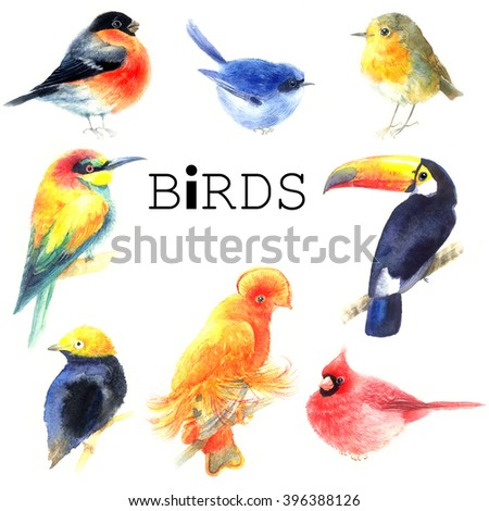 Collection watercolor a variety of birds isolated on white background - stock photo