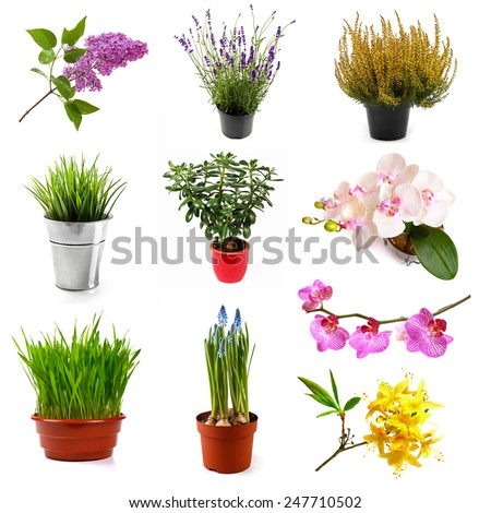 collection with different flowers and plants, isolated on white - stock photo