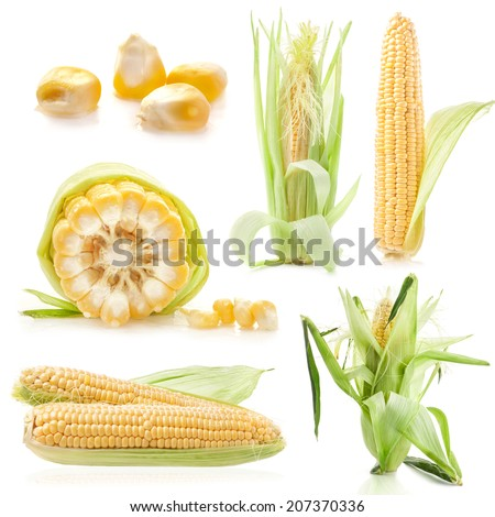 Collections of Fresh raw corn cobs isolated on the white background - stock photo