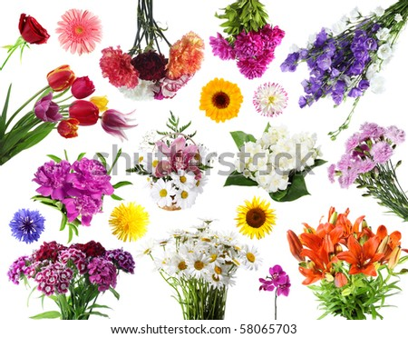 Collections of summer flowers isolated  on white background - stock photo