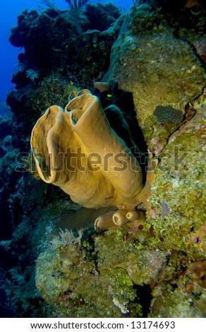 Colofrful Sponge growing off a Cayman Brac Wall - stock photo