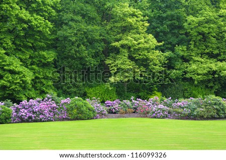 Colonial parc in Brussels, Belgium with blossoming rhododendrons