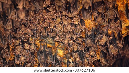 Colony of bats, hanging from the ceiling of Goa Lawah Bat Cave Temple and sleeping, in Bali, Indonesia. - stock photo