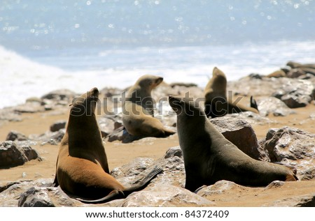 Colony of seals at Cape Cross Reserve, Atlantic Ocean coast in Namibia. - stock photo