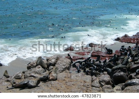 Colony of seals at the Atlantic Ocean in Namibia, Africa - stock photo