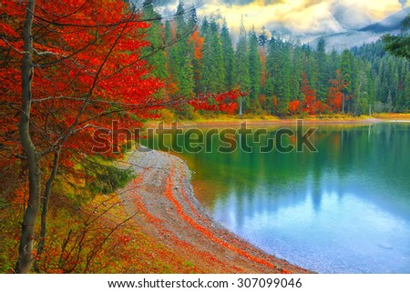 color branches of trees in autumn. Pine trees and lake on background. - stock photo