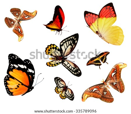 Color butterflies , isolated on white - stock photo