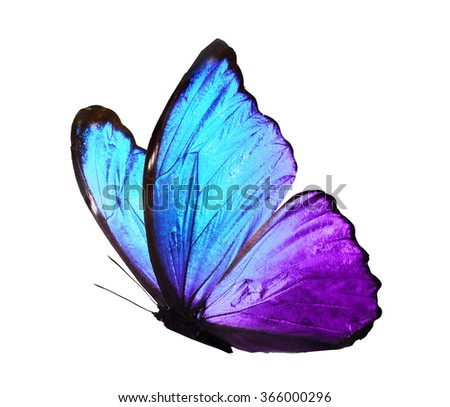 Color butterfly , isolated on white - stock photo