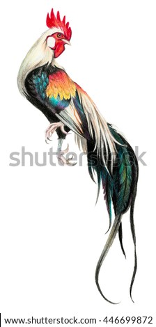 Color drawing with watercolor pencils. Rooster on a white background. - stock photo