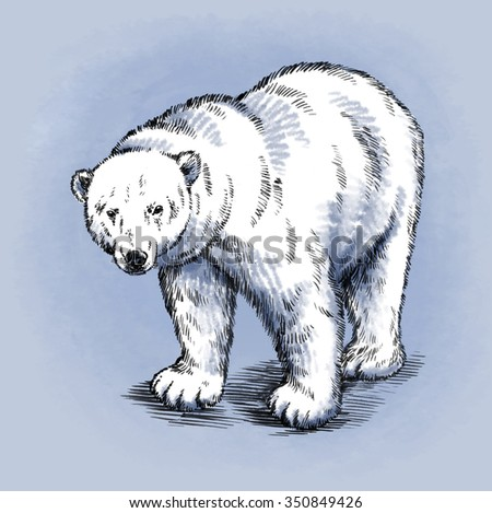 color engrave isolated bear - stock photo