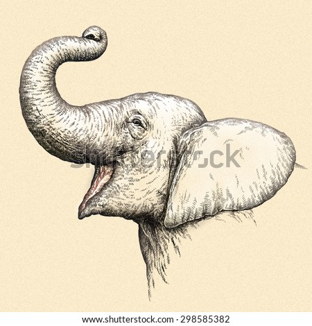 color engrave isolated elephant