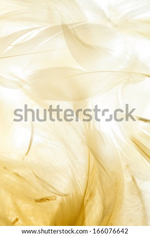 Color feathers - stock photo