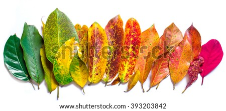 Color leaf. color of nature. Many color autumn leaves. - stock photo
