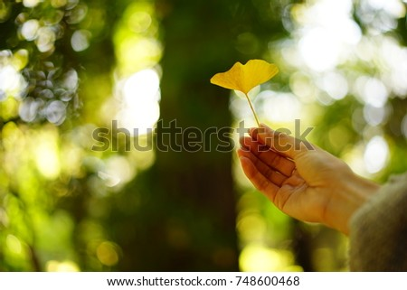 https://thumb9.shutterstock.com/display_pic_with_logo/167494286/748600468/stock-photo-color-leaves-in-a-japanese-garden-in-autumn-748600468.jpg