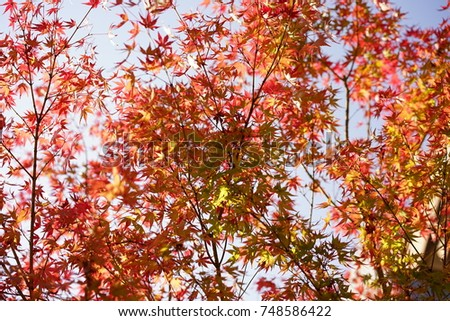 https://thumb9.shutterstock.com/display_pic_with_logo/167494286/748586422/stock-photo-color-leaves-in-autumn-748586422.jpg