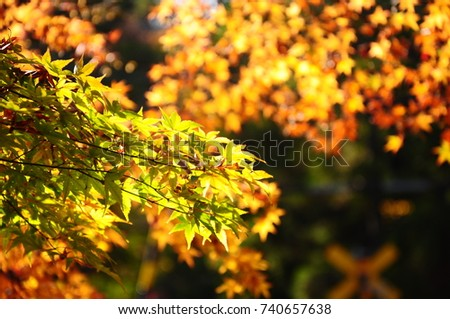 https://thumb9.shutterstock.com/display_pic_with_logo/167494286/740657638/stock-photo-color-leaves-in-japan-740657638.jpg