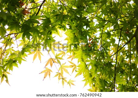 https://thumb9.shutterstock.com/display_pic_with_logo/167494286/762490942/stock-photo-color-leaves-in-japan-762490942.jpg